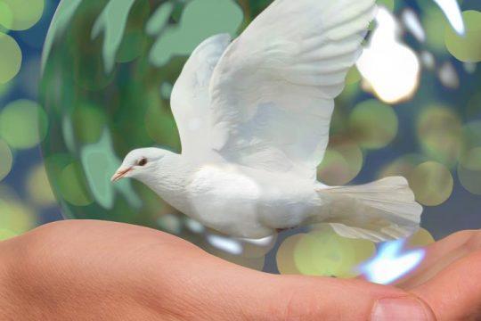 dove-on-hand